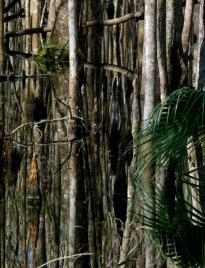 Cypress Pond, St. Marks National Wildlife Refuge, Florida, USA