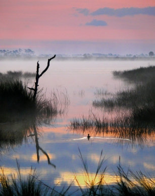 Lone Duck at Dawn, St. Marks National Wildlife Refuge, Florida, USA