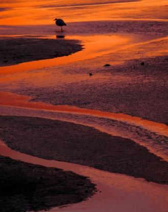 Serpentine Channel, St. Marks National Wildlife Refuge, Florida, USA