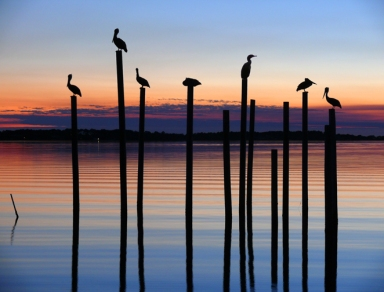 Seven Birds at Dusk, Alligator Point, Florida, USA