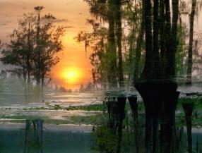 Sky Swamp, Lake Miccosukee